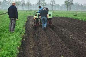 2012-05-03-Kartoffelpflanzen